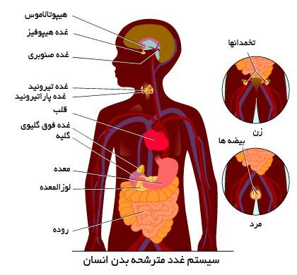 هورمون ها و دستگاه غدد درون ریز