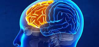 آناتومی فیزیولوژیک قشر مغز